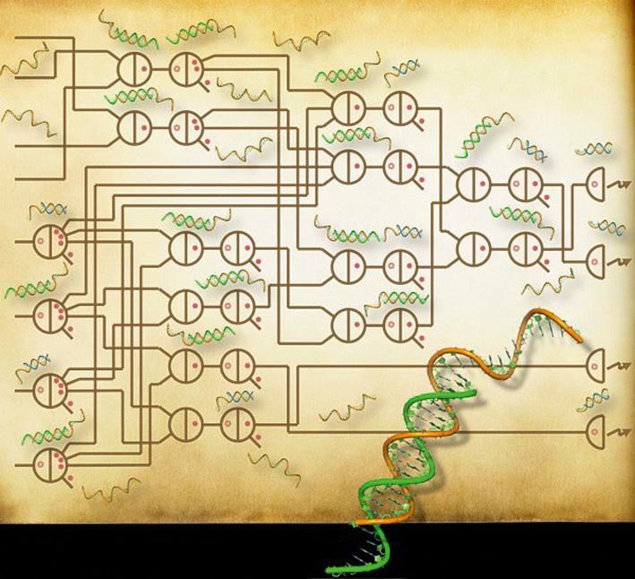 Учёные совершили огромный прорыв в сторону компьютеров на ДНК