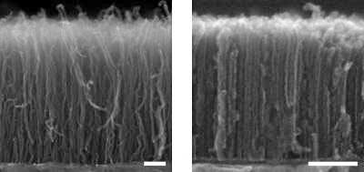 Исследователи успешно ускорили и упростили метод выращивания нанотрубок