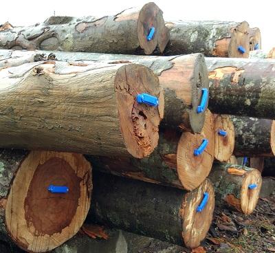 RFID-технологии в лесозаготовительной отрасли